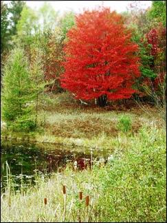 tustintrees2.jpg