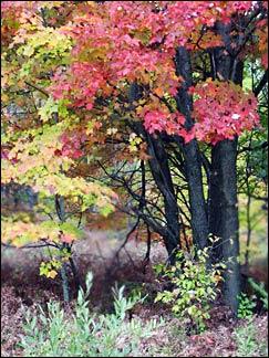 tustintrees3.jpg