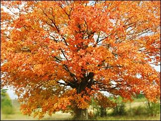 tustintrees5.jpg