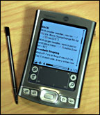 palm2.jpg
